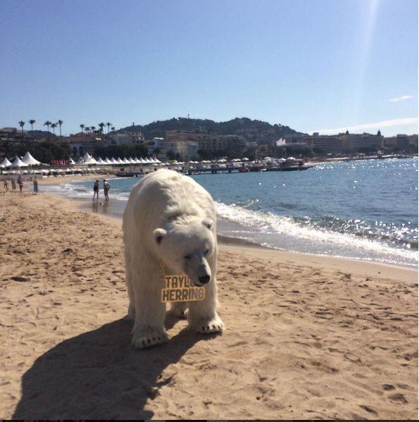 Adpage_bear2